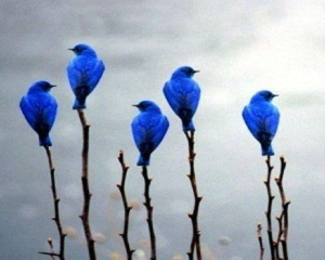 birdplant